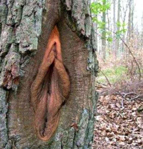 Vagina2